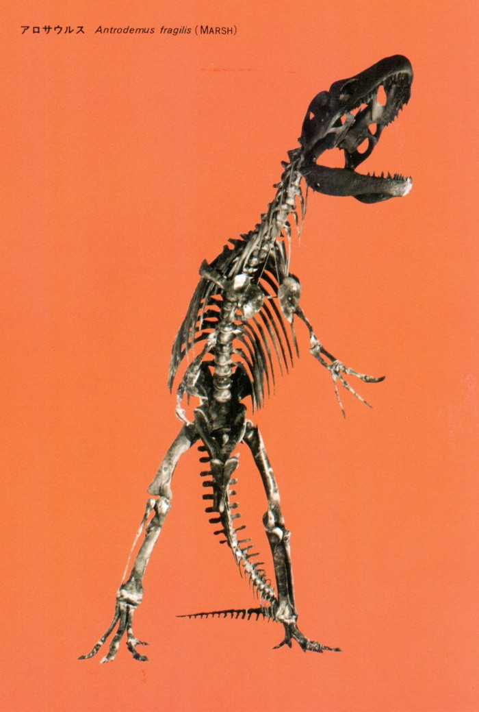 Allosaurus-skeleton-postcard-