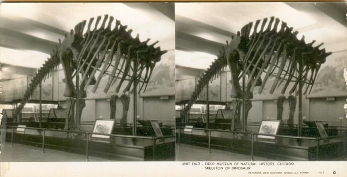 Apatosaurus stereo