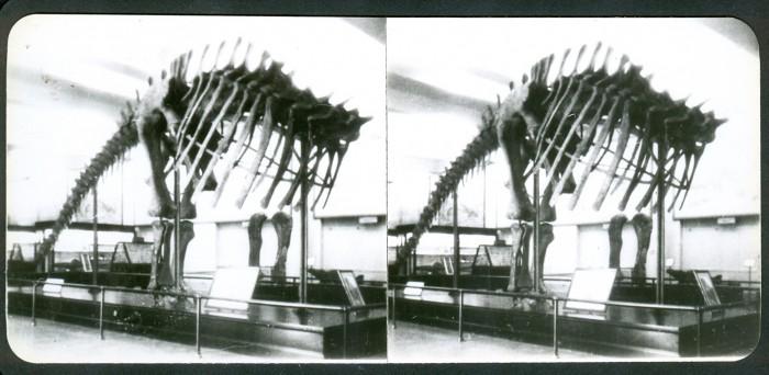Apatosaurus8-700x342