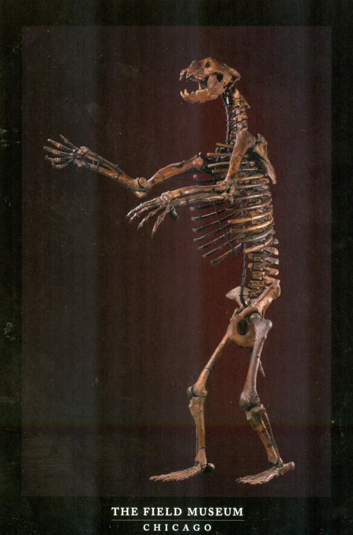 Arctodos skeleton
