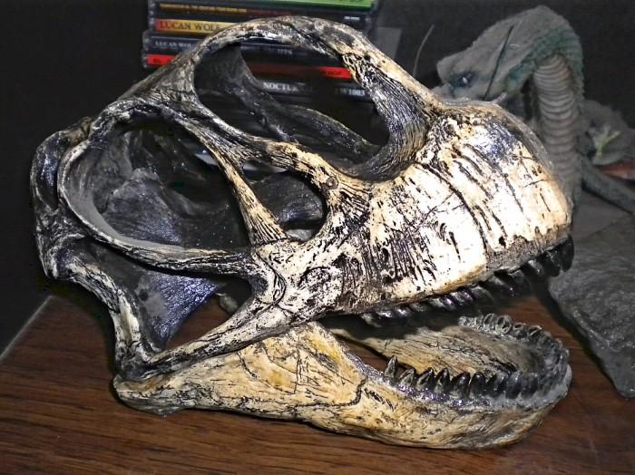 Camarasaurus-skull-