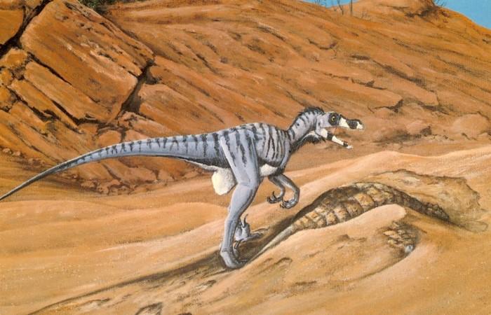 Franczek-Velociraptor-