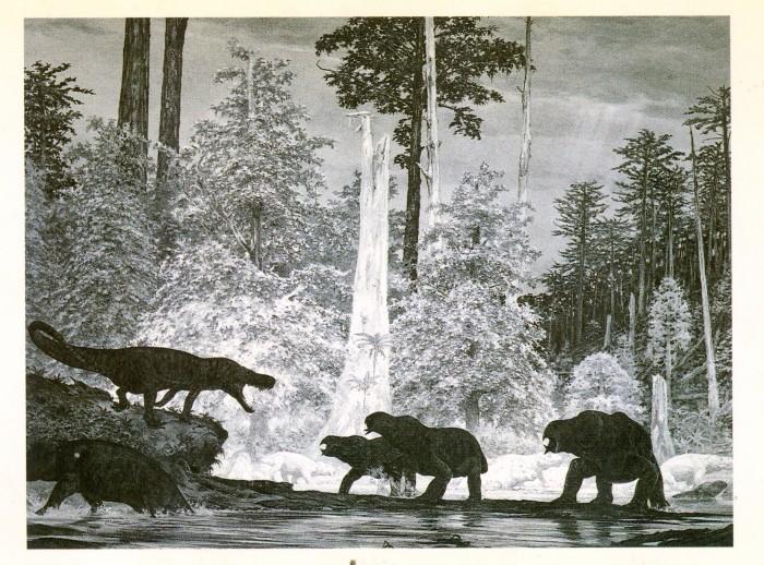 Henderson Petrified Forest scene