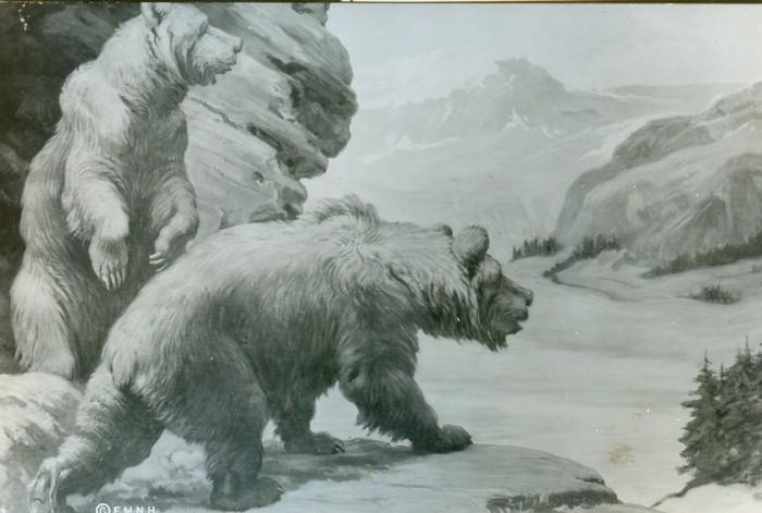 Knight cave bears