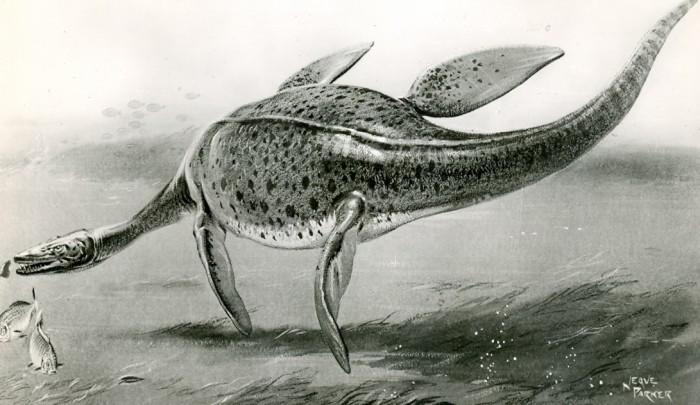 Parker plesiosaur