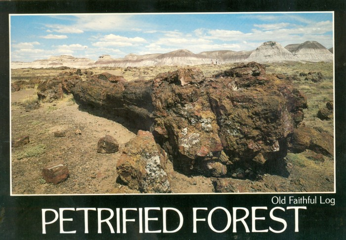 Petrified Forest, AZ postcard