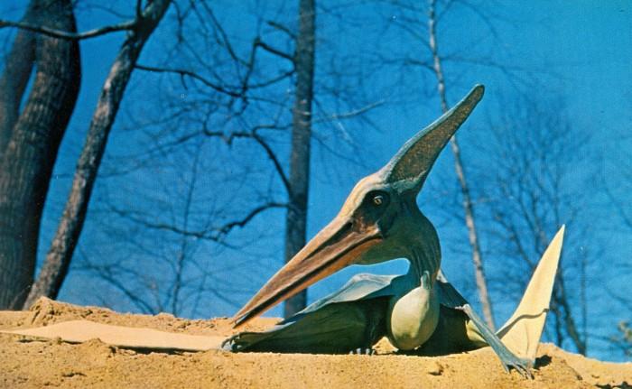 Pteranodon model