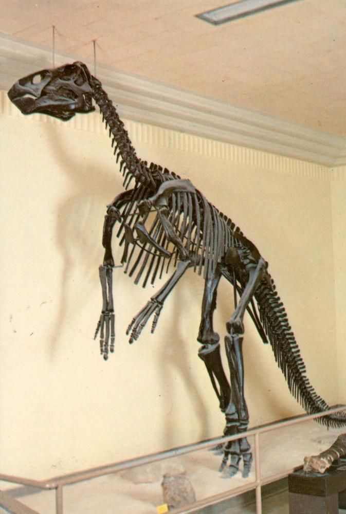 South-Dakota-Edmontosaurus-skeleton1-673x1000