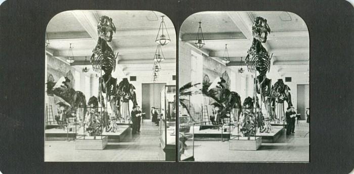 Tyrannosaurus-skeleton stereo view