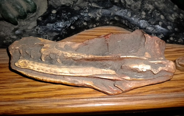 Velociraptor-holotype