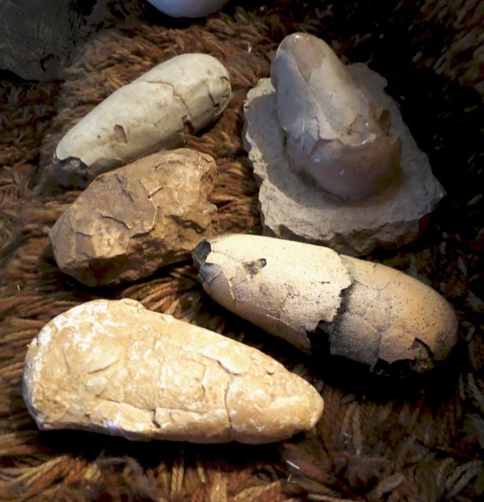 dinosaur egg casts