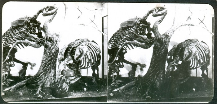ground sloth skeletons