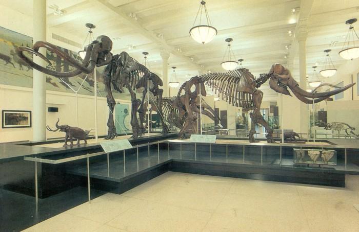 mammoth & mastodon