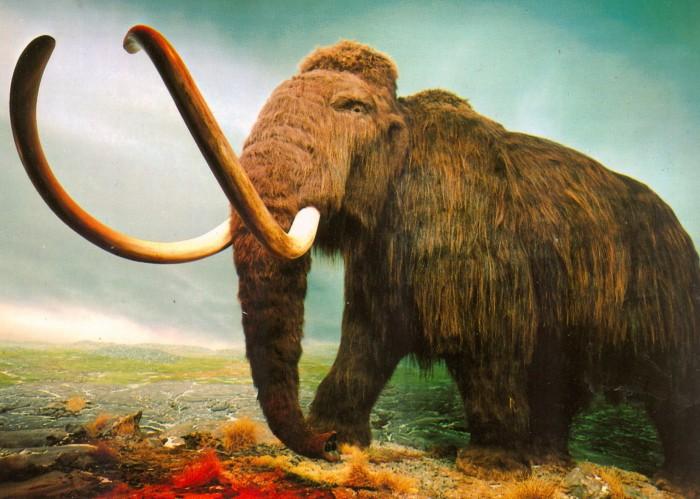mammoth postcard