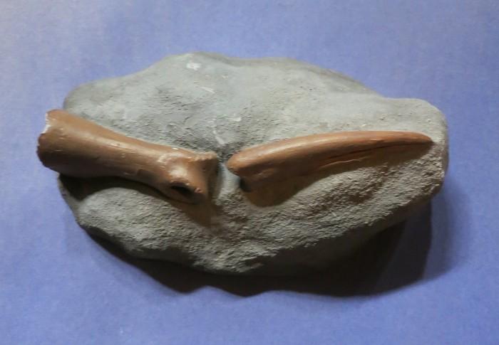 ornithomimid finger bones