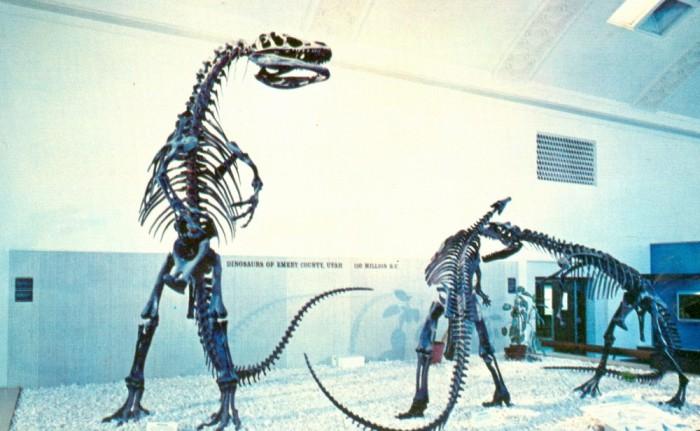 Allosaurus-Camptosaurus-skeletons-1000x617