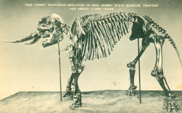 Mastodon New Jersey State Museum