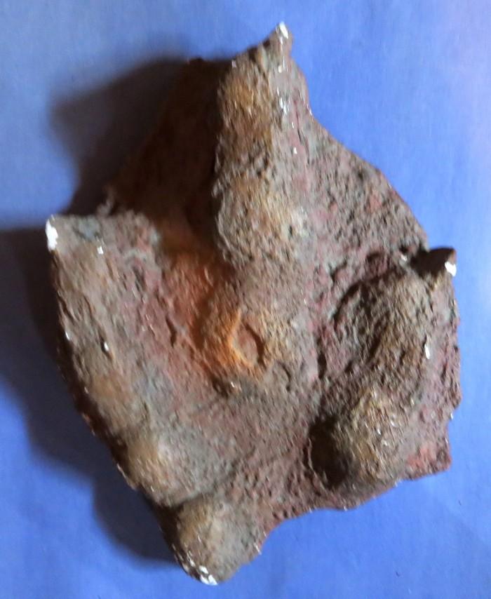 dilophosaur track