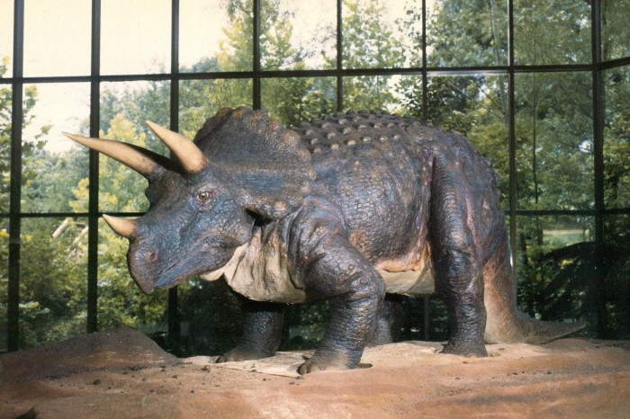 Pink Palace Triceratops