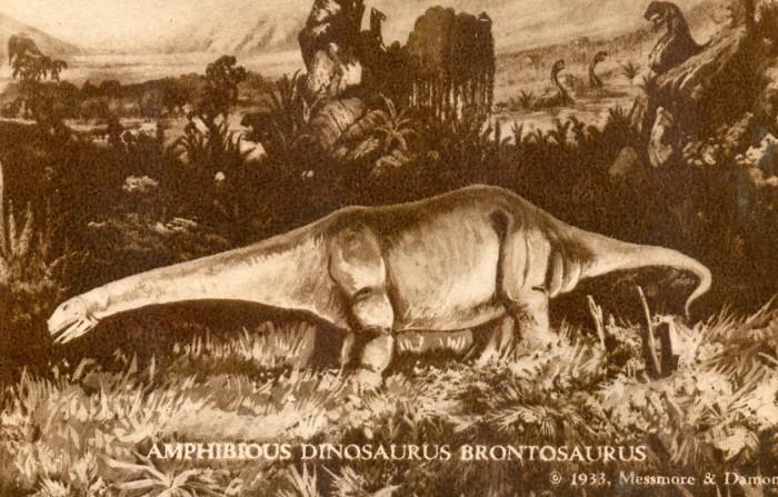 WAMYA Apatosaurus