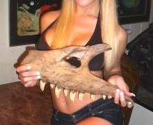 Albetosaurus-maxilla-