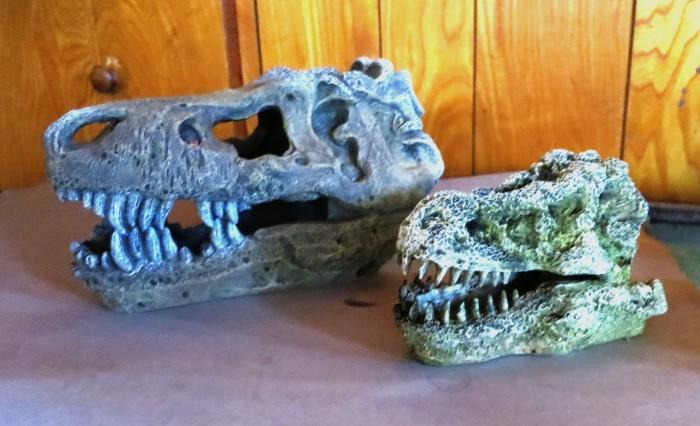 Aquarium T. rexes