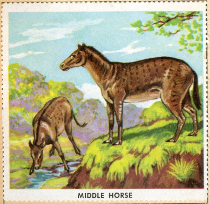middle horse