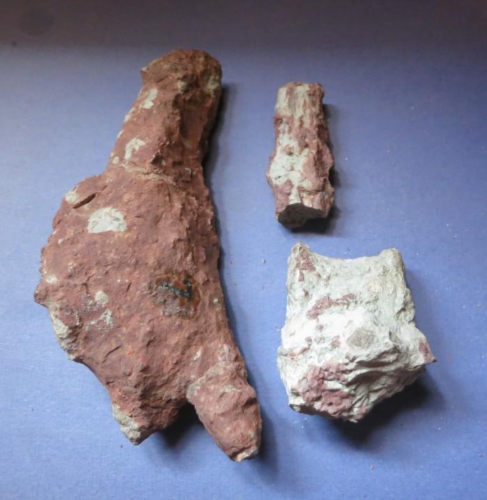 Dimetrodon parts