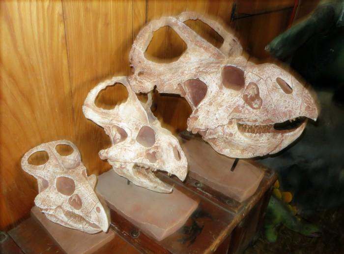 Protoceratops ontogeny