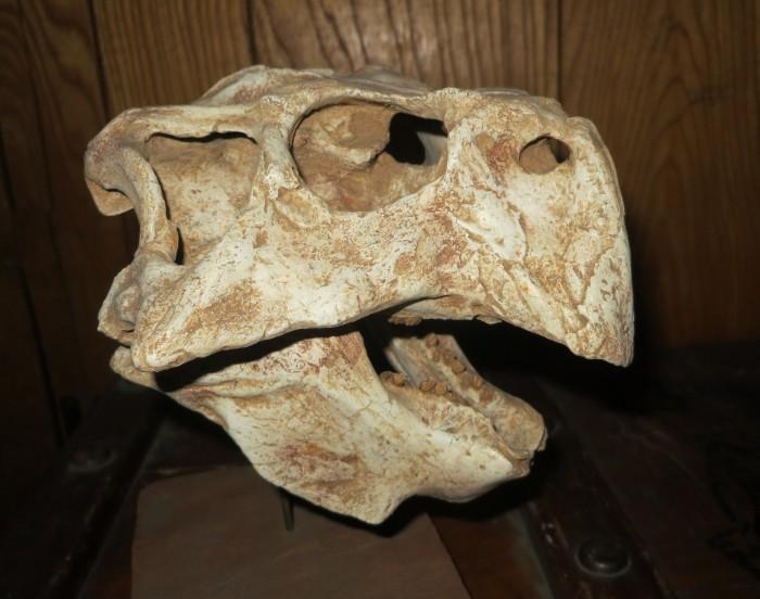 Psittacosaurus skull cast