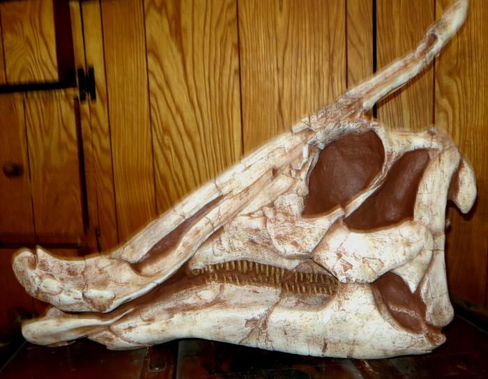 Saurolophus-skull-