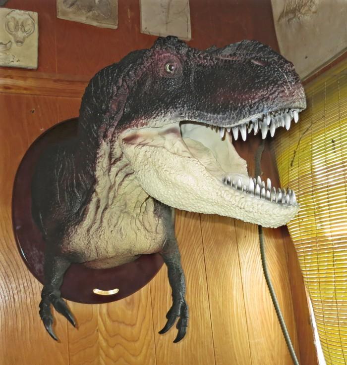 Tyrannosaurus-head-wall-mount