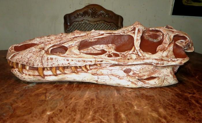 Alioramus skull