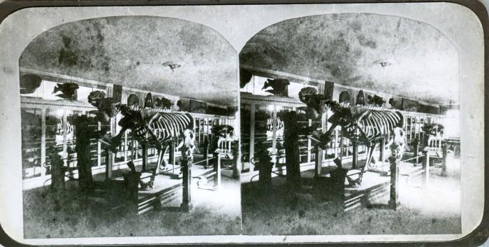 Megatherium2