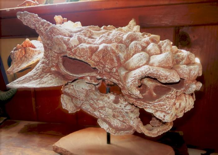 Minotarasaurus skull cast