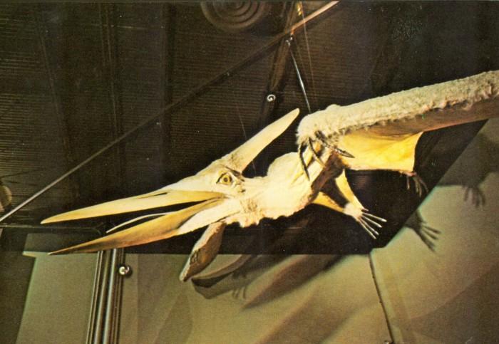 Pteranodon model postcard