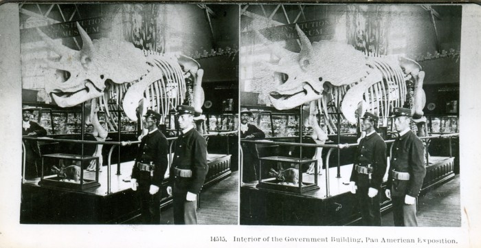 Triceratops stereograph