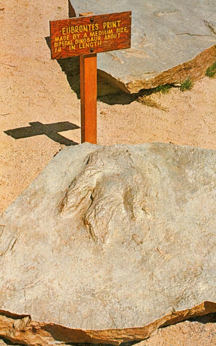 Dinosaur State Park Eubrontes print
