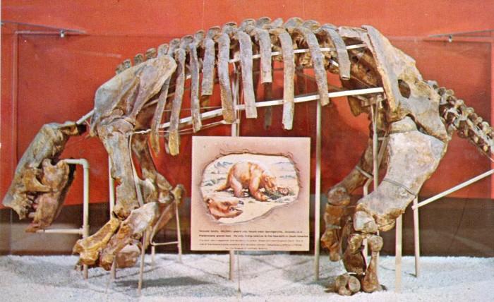 Paramylodon skeleton