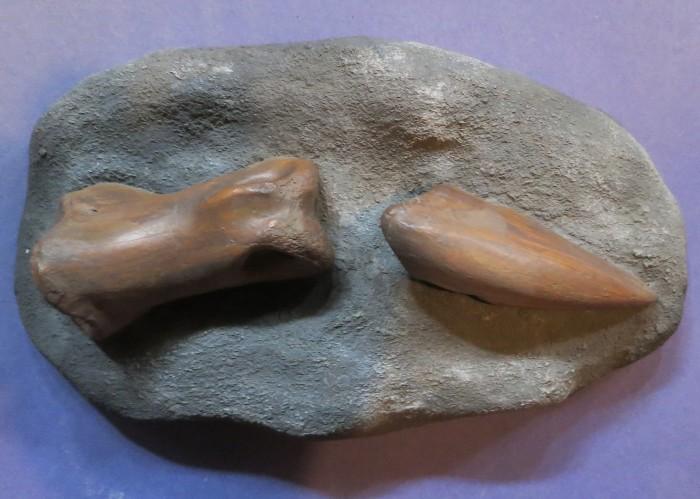 tyrannosaurid-finger bones